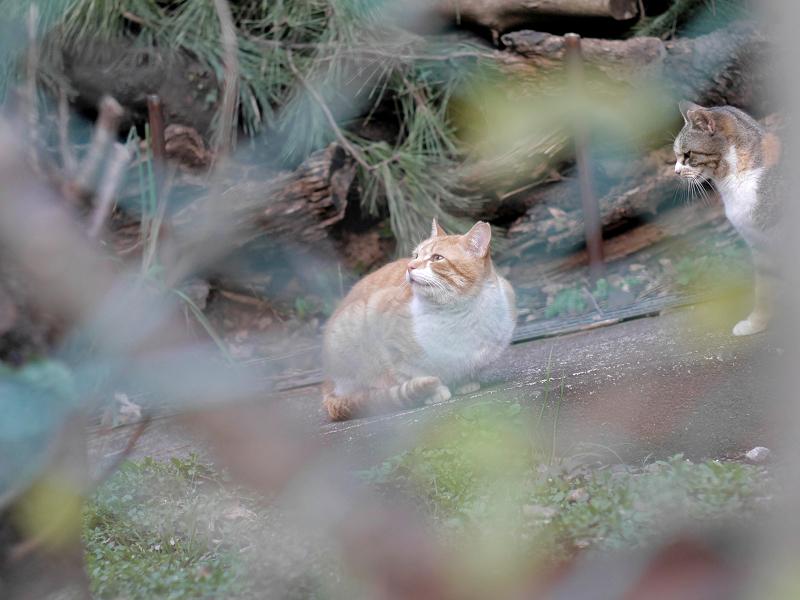 金網の向う側のスロープの猫たち2