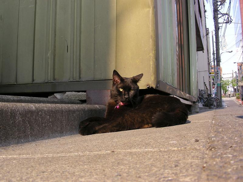 街なか縁石で腹ばう黒猫1