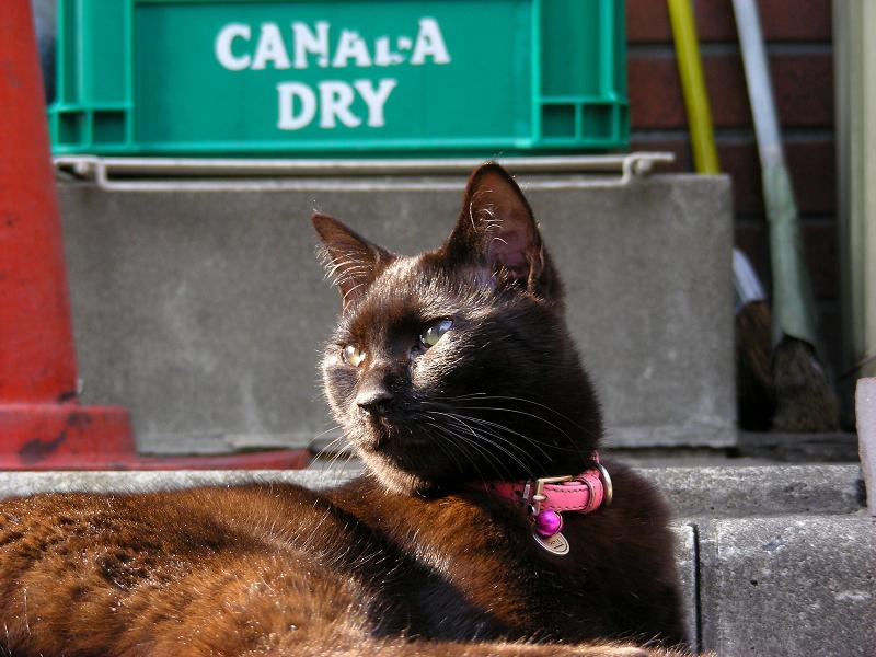 街なか縁石で腹ばう黒猫2