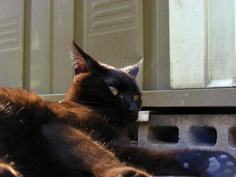 街なか縁石で腹ばう黒猫3