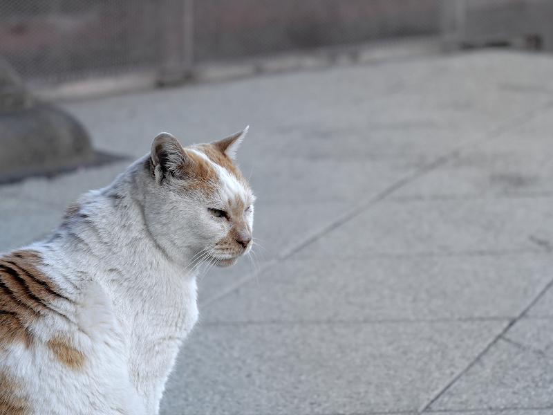 目覚めがスッキリな白茶猫2