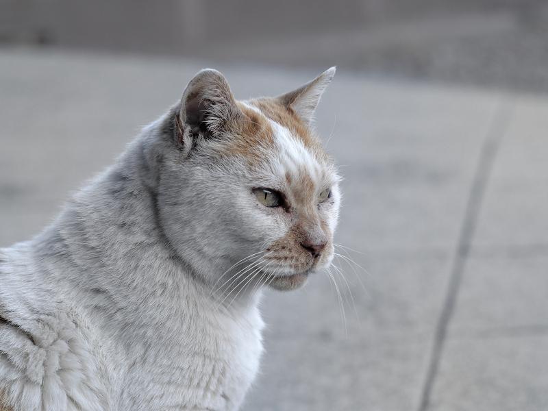 目覚めがスッキリな白茶猫3