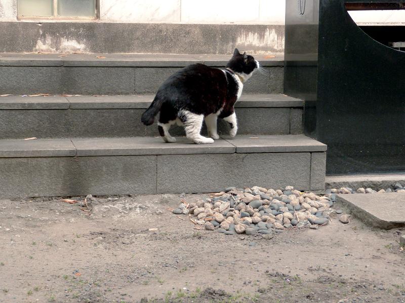 献花台へ飛び上がる黒白猫1