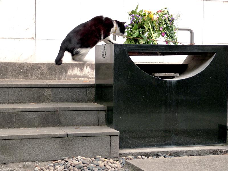献花台へ飛び上がる黒白猫2