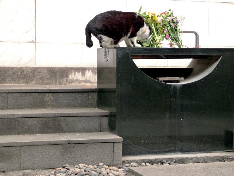 献花台へ飛び上がる黒白猫3