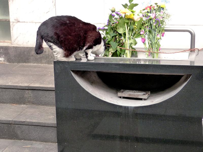 献花台へ飛び上がる黒白猫4