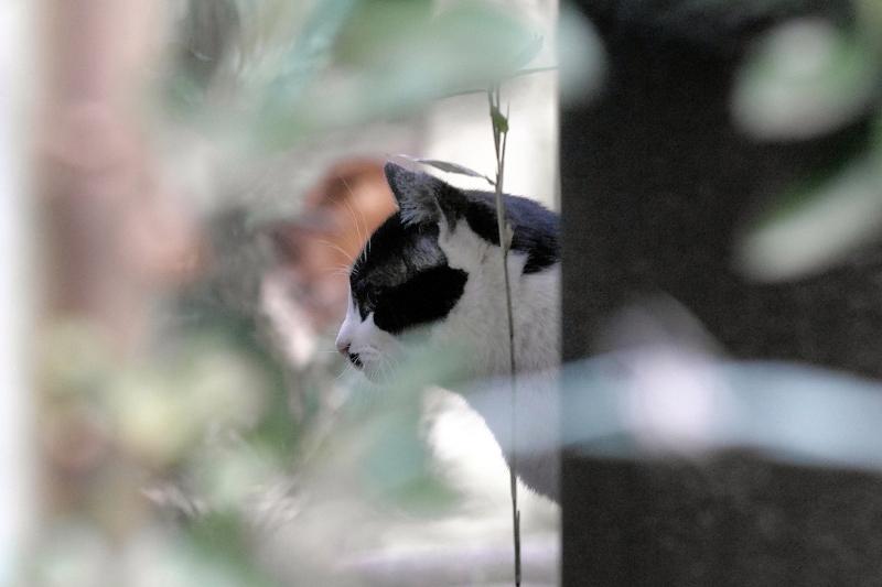金網の向う側幹の奥の猫1