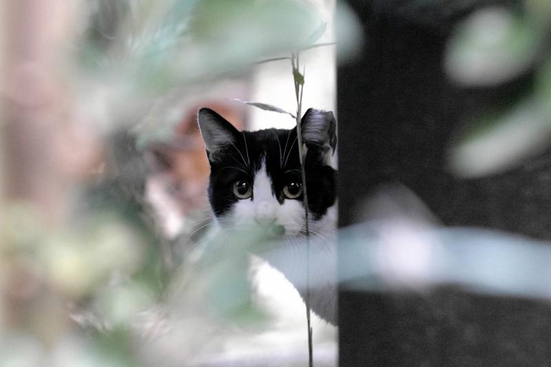 金網の向う側幹の奥の猫2