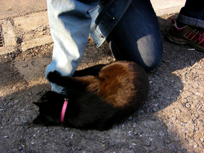 Gジャンの袖で遊ぶ黒猫1