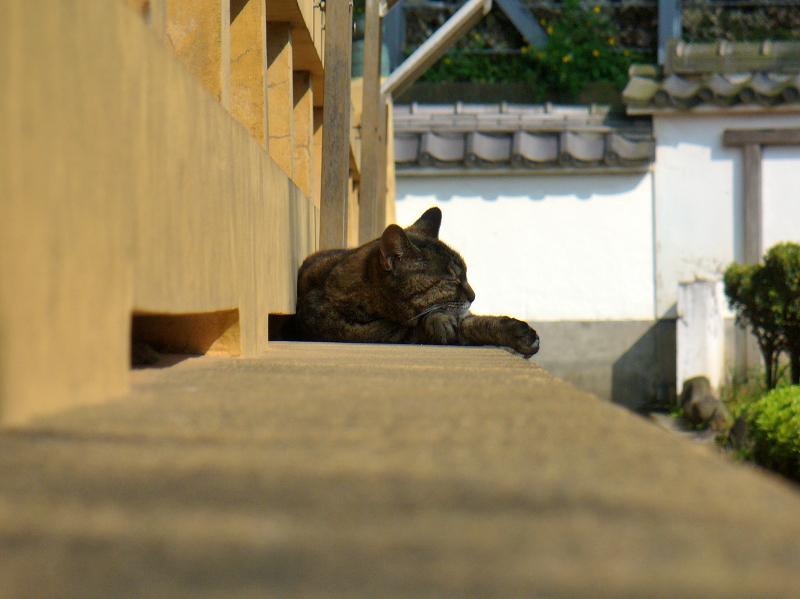 濡れ縁の外側で寝てるキジトラ猫1