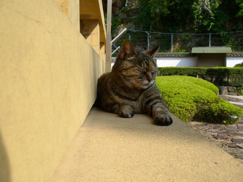 濡れ縁の外側で寝てるキジトラ猫2