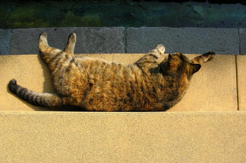 濡れ縁の外側で寝てるキジトラ猫3