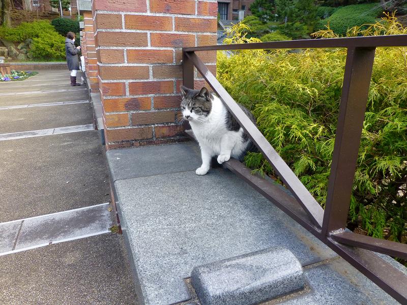 植え込みから煉瓦ベンチへ出て来たキジ白猫1