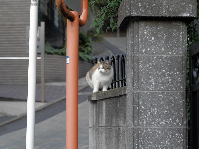 コンクリート門扉の猫1