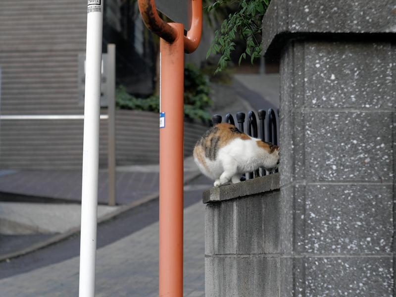 コンクリート門扉の猫3