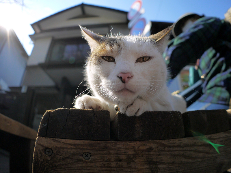 ベンチに乗った白三毛猫1