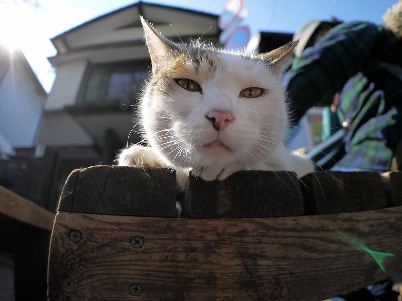ベンチに乗った白三毛猫2