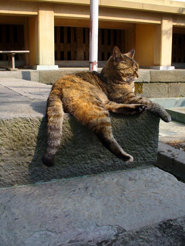 礎石の上のサビ柄猫1