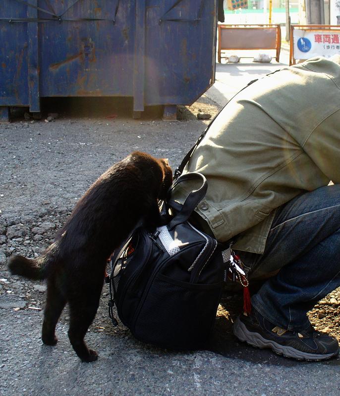バッグに乗ろうとする黒猫1