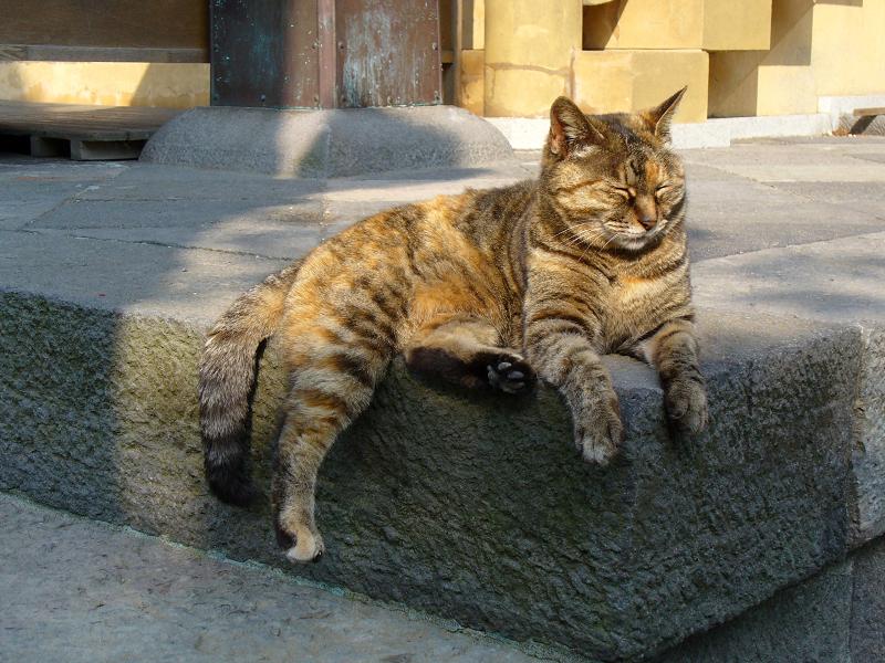 礎石の上のサビ柄猫2