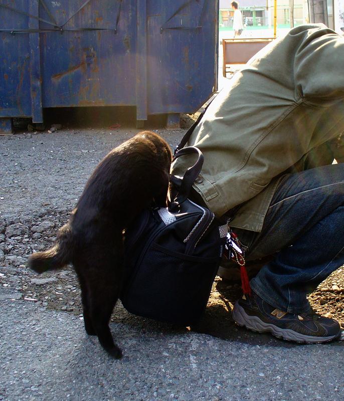 バッグに乗ろうとする黒猫2