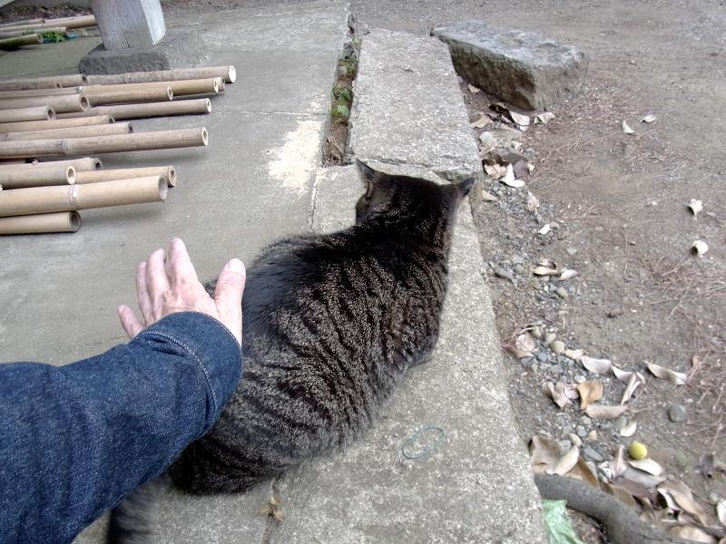 腰をトントンされる「キジトラ猫1