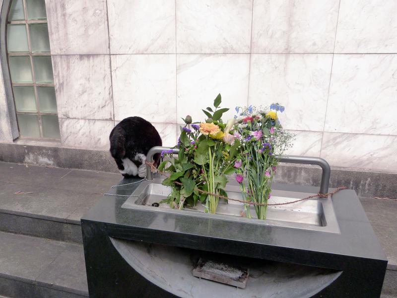 献花台から降りる黒白猫2