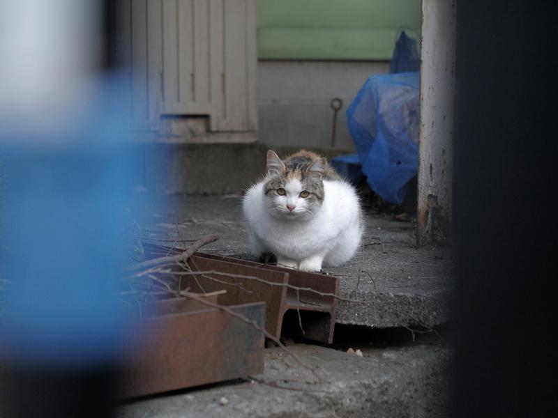 門扉から降りた猫1