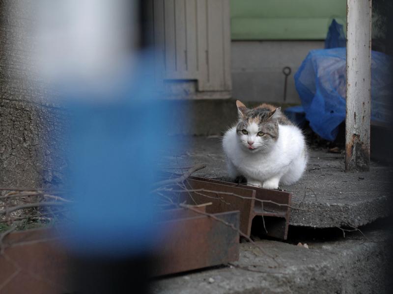 門扉から降りた猫2