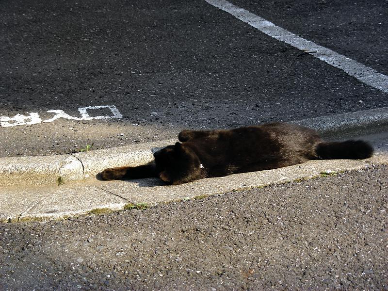 街なかで自由に振る舞う黒猫1