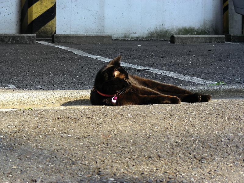 街なかで自由に振る舞う黒猫2