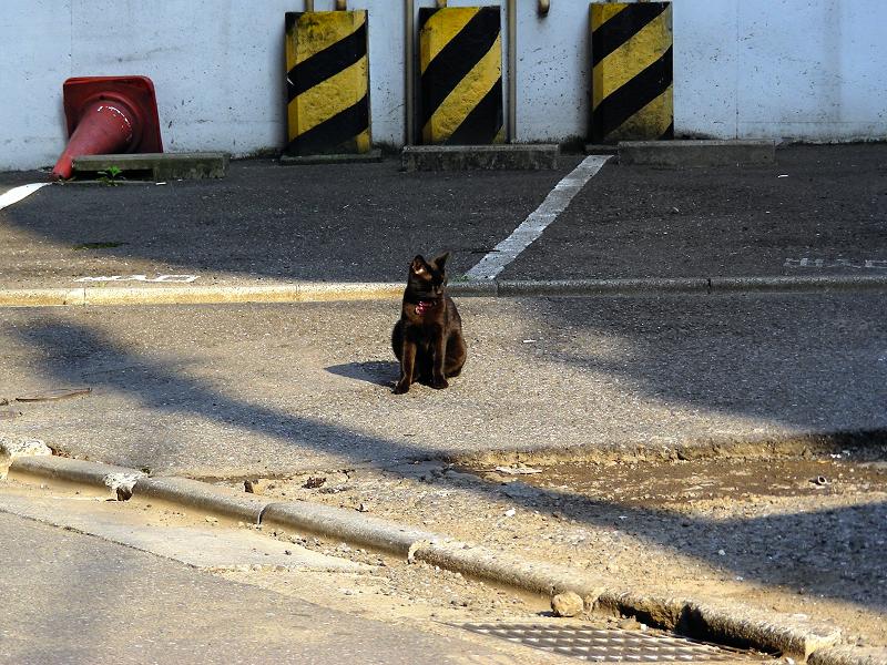街なかで自由に振る舞う黒猫3