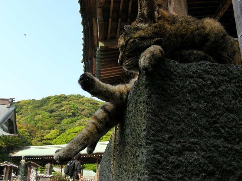 サビ柄猫の寝姿3