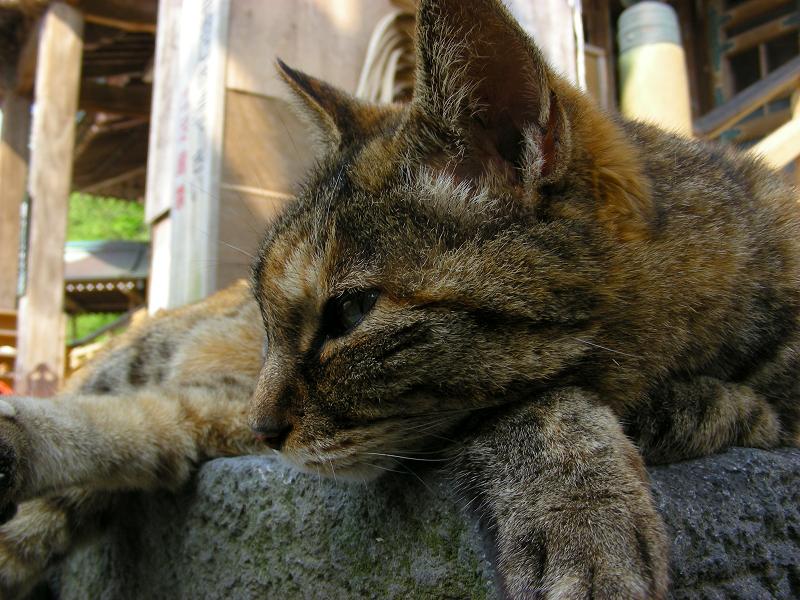 サビ柄猫の寝姿4