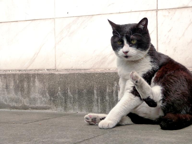 ノンビリと毛繕いを初めた黒白猫1