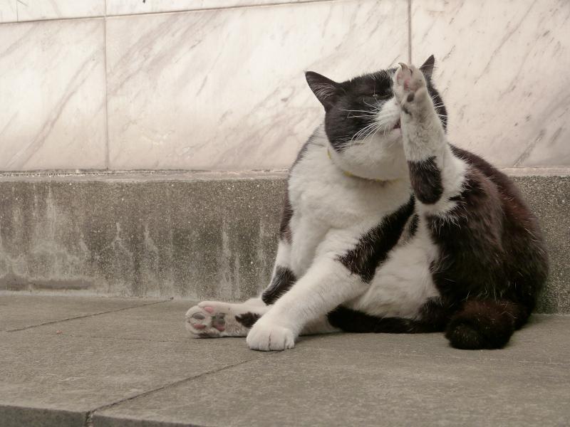 ノンビリと毛繕いを初めた黒白猫3