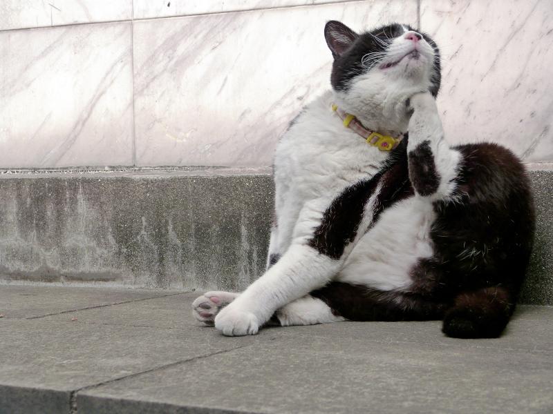 ノンビリと毛繕いを初めた黒白猫4