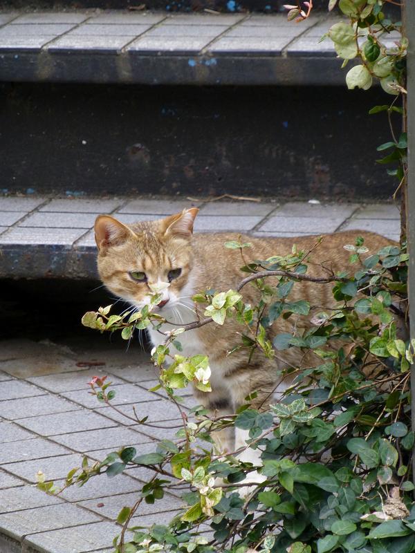 物陰から見ていた猫1