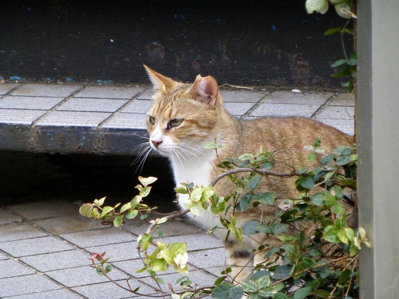 物陰から見ていた猫2