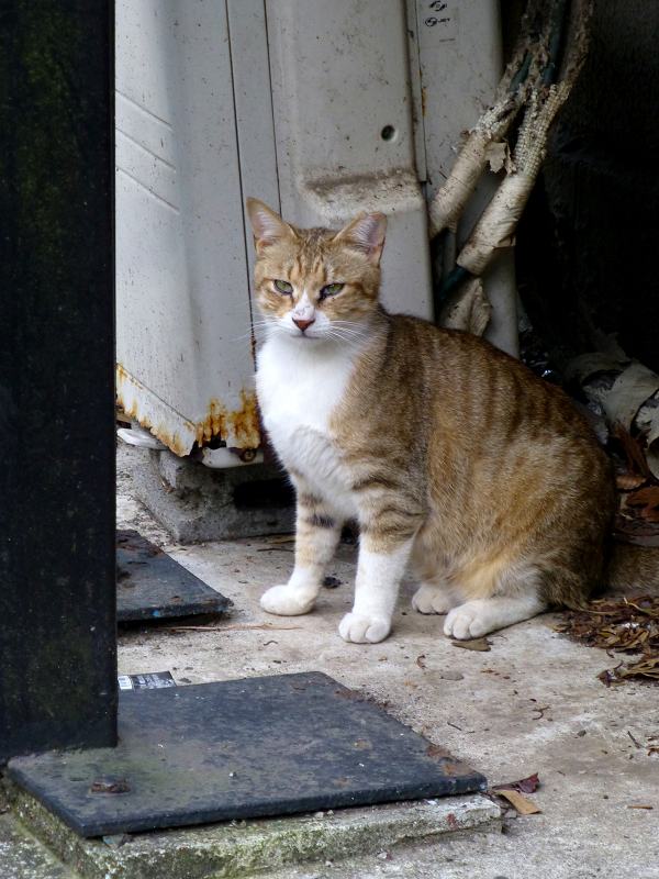 物陰から見ていた猫3