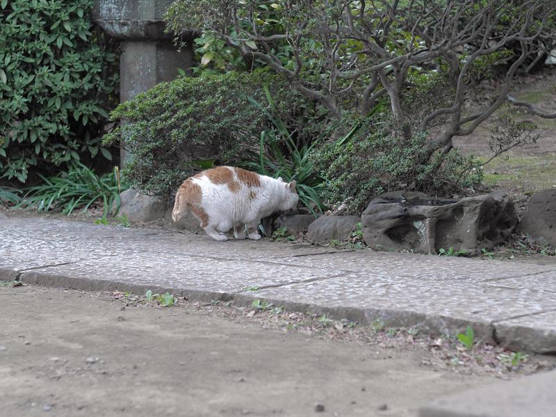 睨み合う白茶猫と黒白猫3