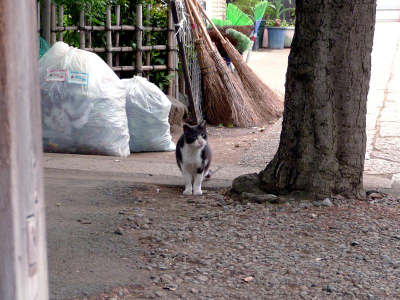 焦って出て来た黒白猫2