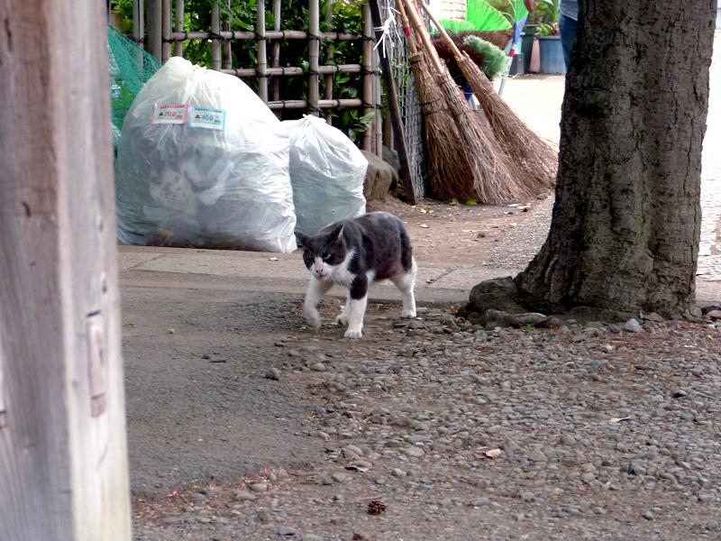 焦って出て来た黒白猫3
