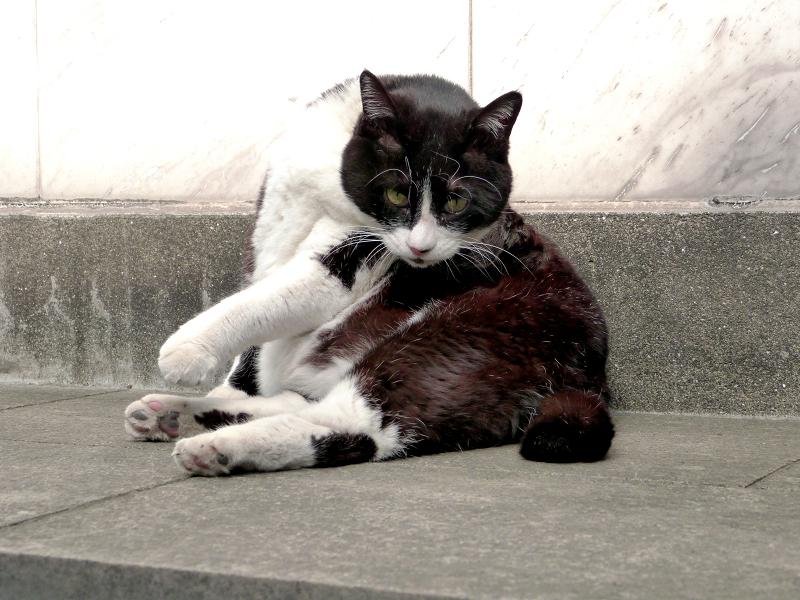 毛繕いする黒白猫1