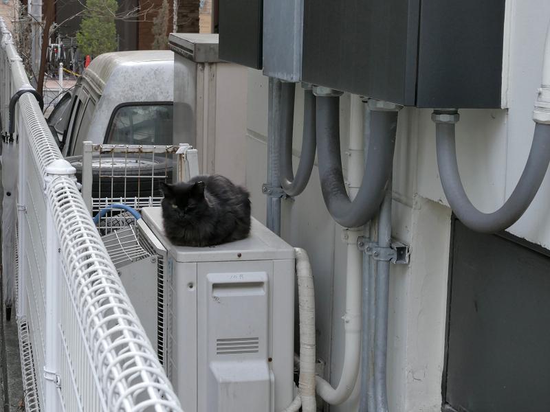 室外機と毛が長い黒猫1