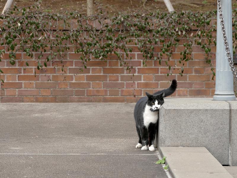 体を擦り付ける黒白猫2