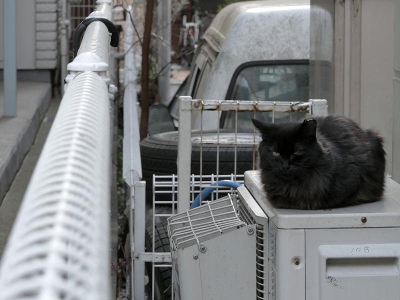 室外機と毛が長い黒猫2