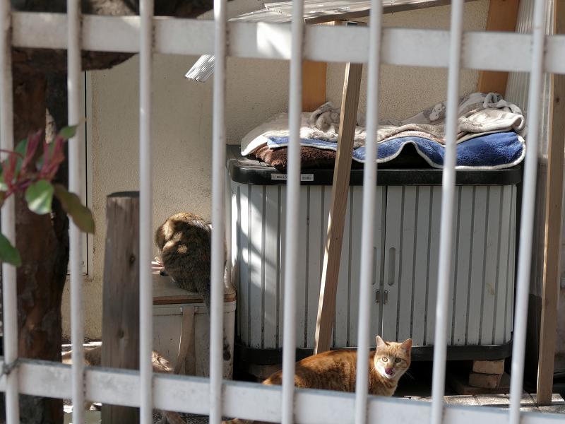 民家の横の猫たち2