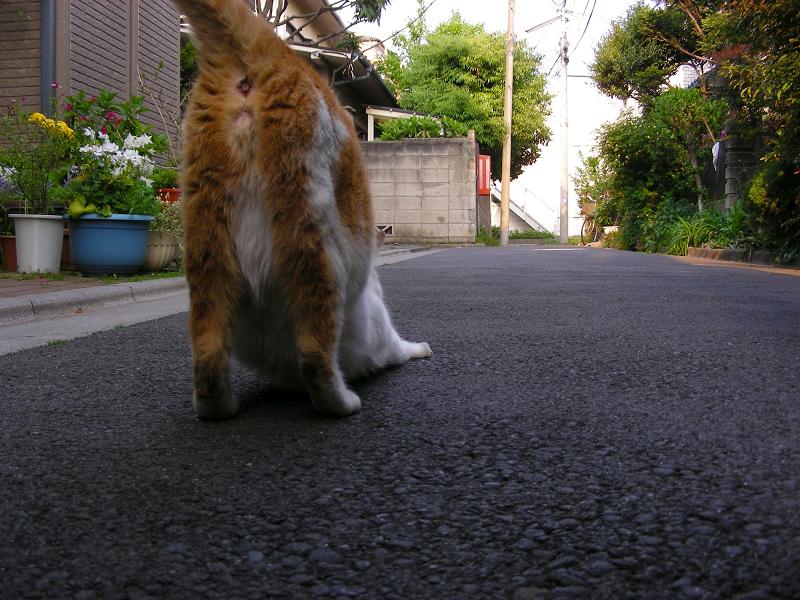 路地を歩いてる茶白猫3
