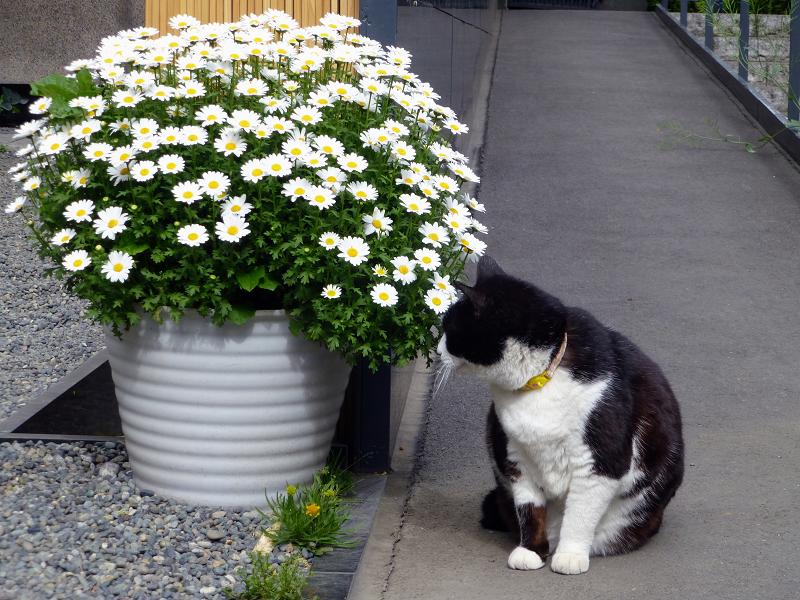 スロープから見ていた黒白猫1